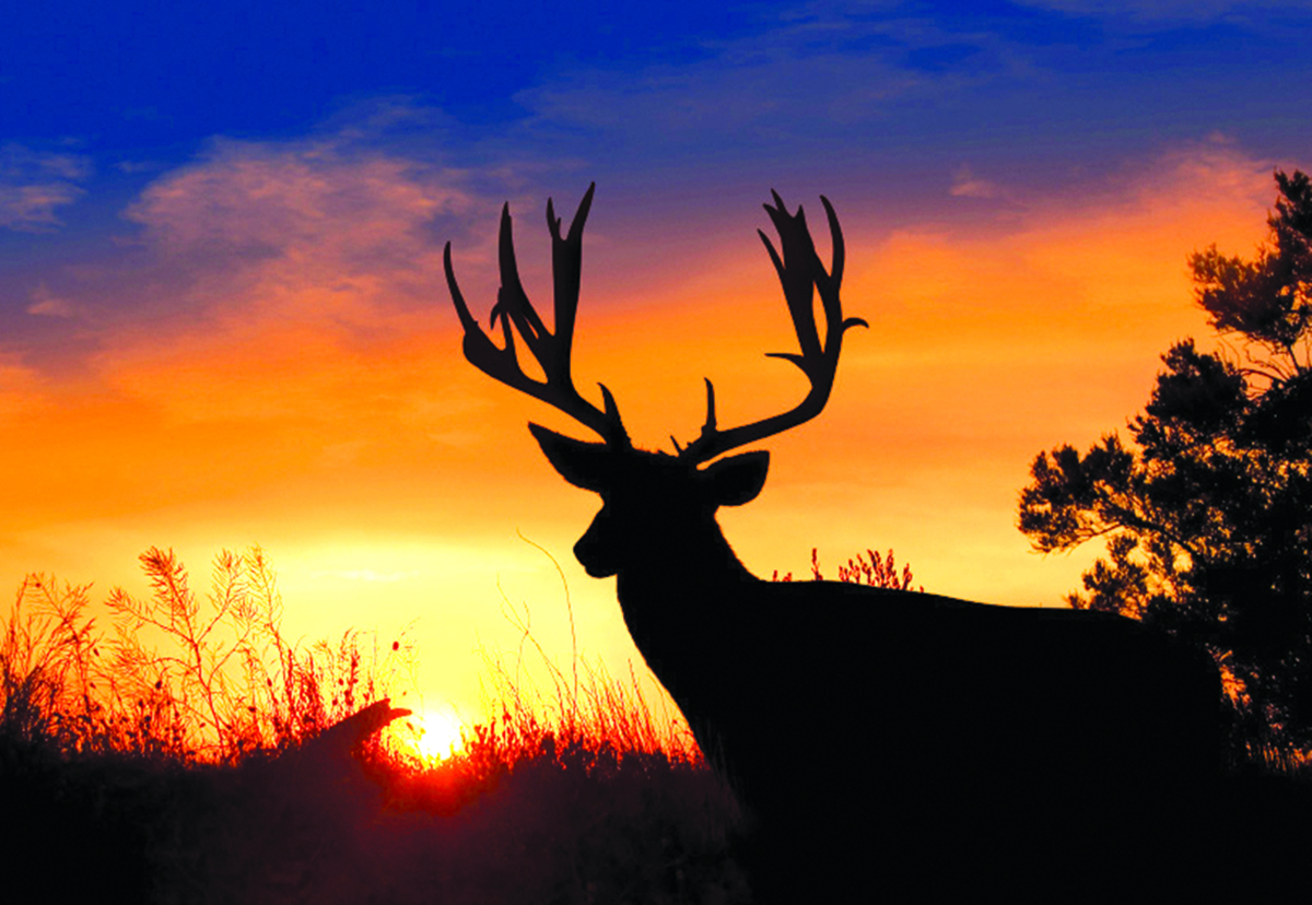 Telling Whitetail Tales