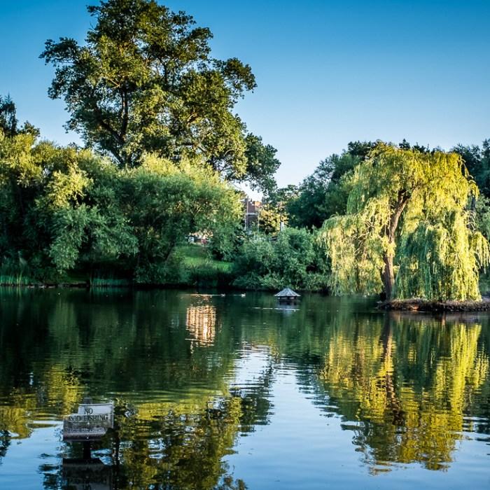 Wetlands & Ponds