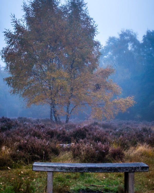 Chislehurst Commons Heathland