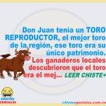 El toro y los ganaderos – Chistes geniales