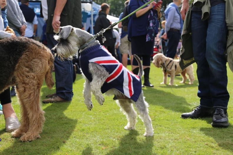 Chiswick House Dog Show 15