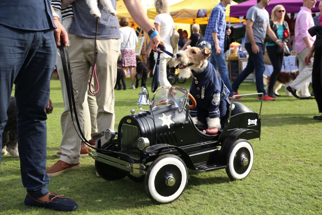 Chiswick House Dog Show 21