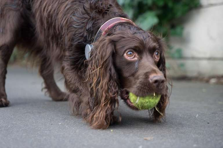 Chiswick Calendar Photographers Anna Kunst It's my ball!