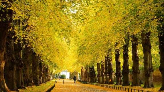 Chiswick Calendar Photographers Jon Perry Falling Leaves