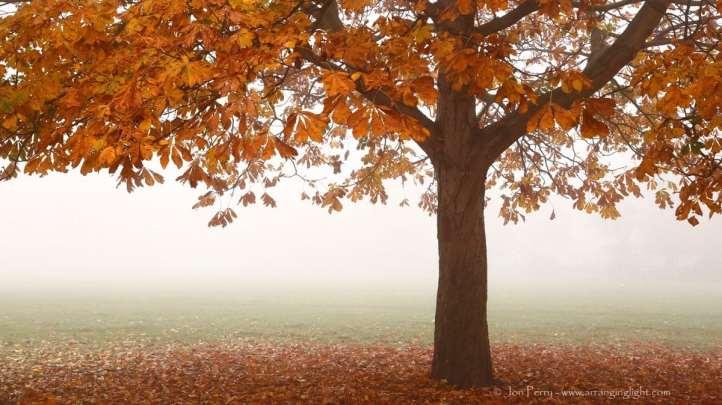 Chiswick Calendar Photographers Jon Perry Losing Leaves Enlightenshade
