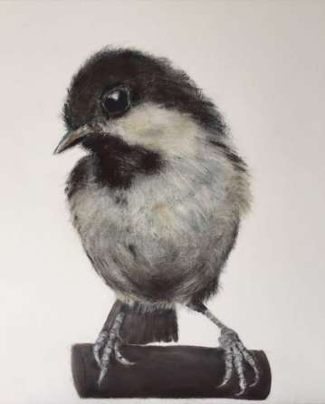 Chiswick in Pictures Jill Meager Coal Tit