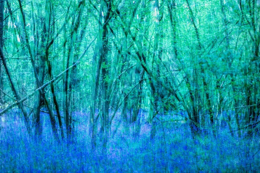 Bluebell Forest by Anna Kunst