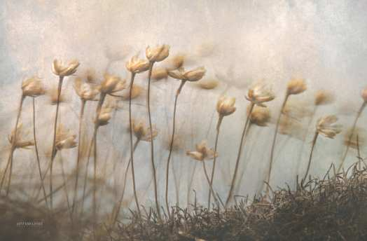 Cliff Flowers in the Breeze by Anna Kunst