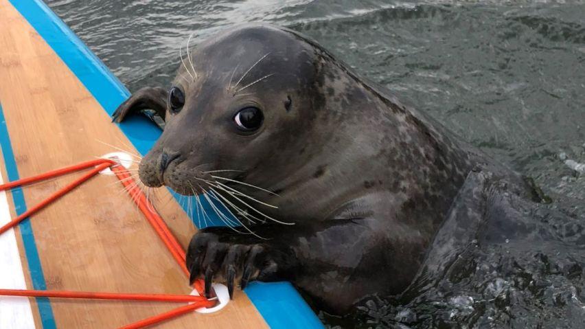Wayne the seal 1_cropped_web