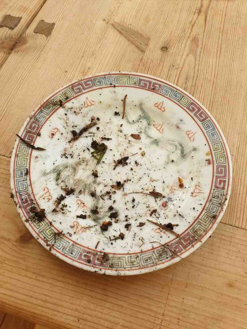 Hedgehogs-clean-plate__web-e1557814039200