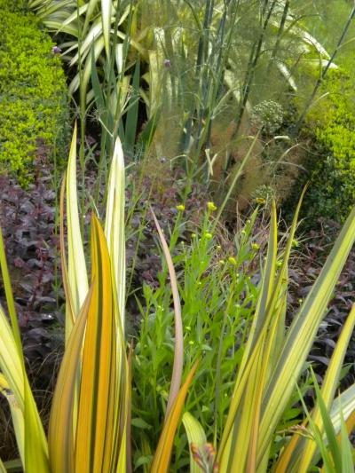 Tracy & Ian's garden 5_web