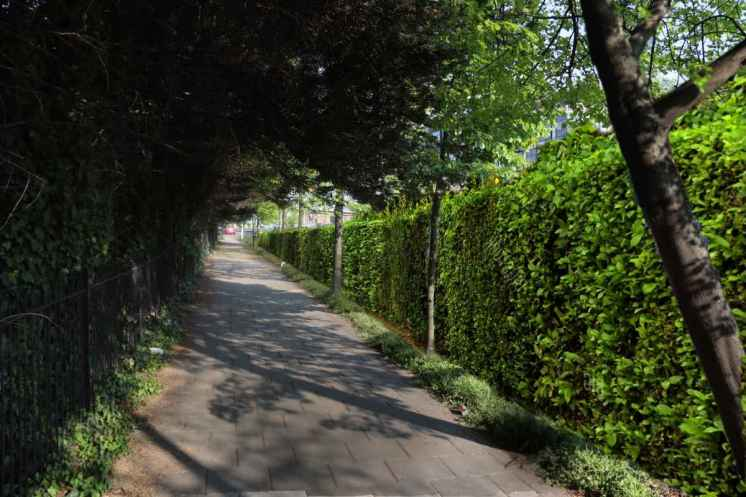 how-the-hedge-could-look-for-pedestrians__web