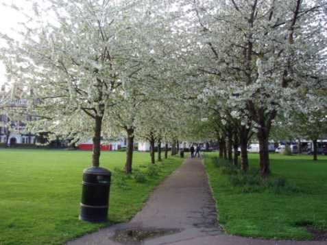 spring blossom trees turnham green chiswick