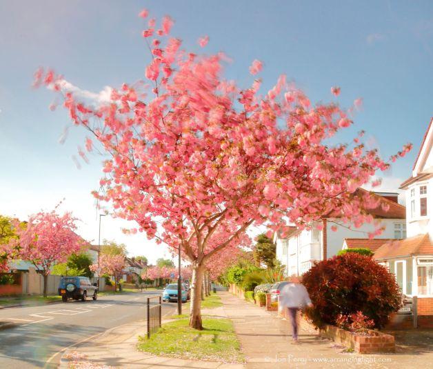 _C0A9364RWS Pink Breeze, © Jon Perry, 12-4-17