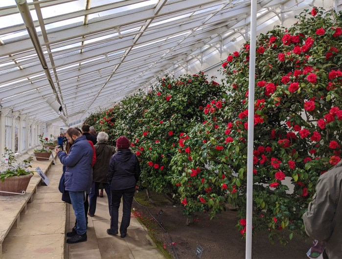 Chiswick House Camellia Show 17