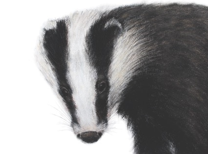 'Badger' by Jill Meager