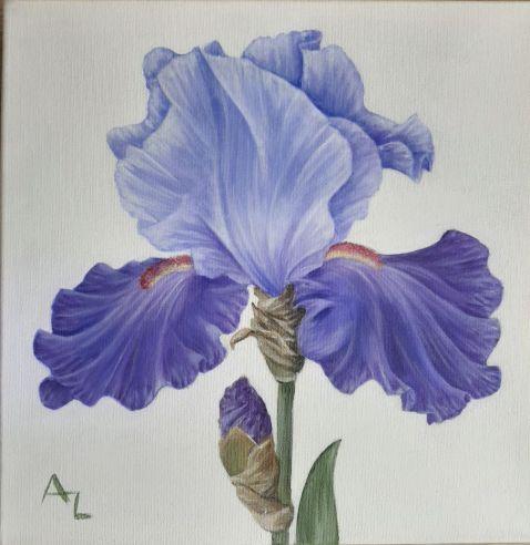 Annie Leach - Iris