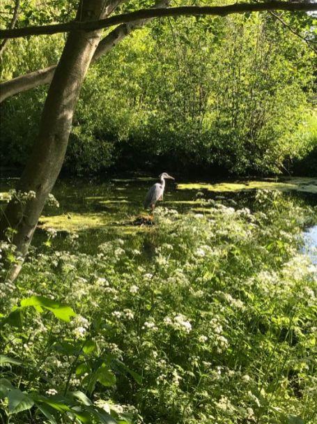 Chiswick Life - Dinah Garrett, Heron