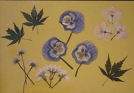 Juliette Hawes - Pressed Flowers From My Garden (Unframed)