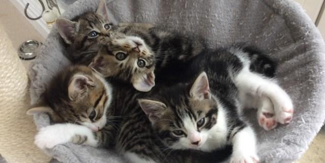 Hounslow Animal Welfare