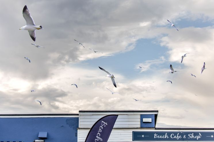 Landscapes and Seascapes - Anna Kunst, beach cafe & birds