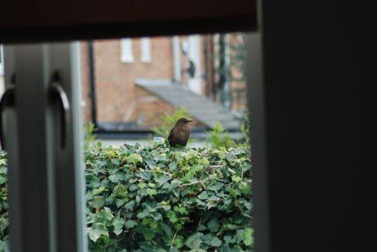 Natural World - Lee Larson, Through the Window