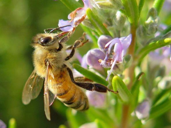 Natural World - Linda Reynolds, Busy bee