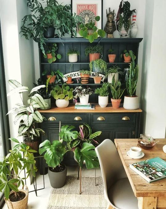 Houseplants on the Welsh dresser