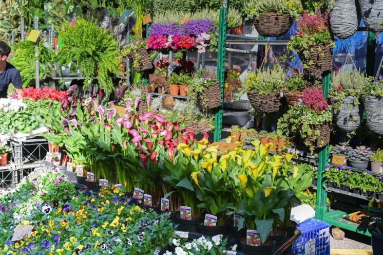 FLOWERS AT CHISWICKFLOWERMARKET-4456 - FRANK NOON_WEB