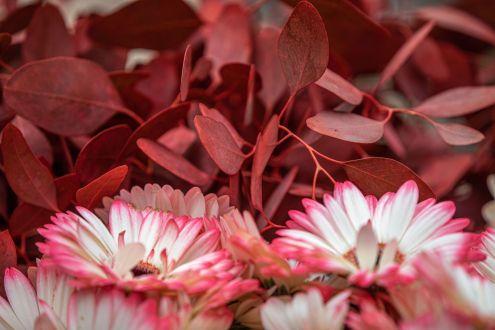 FlowerMkt-1085