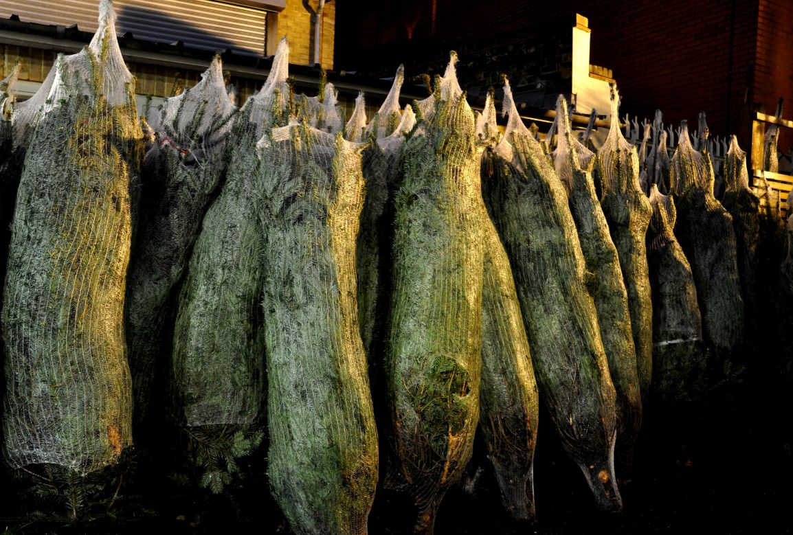 Bagged Christmas Trees - Marianna Mahaffey