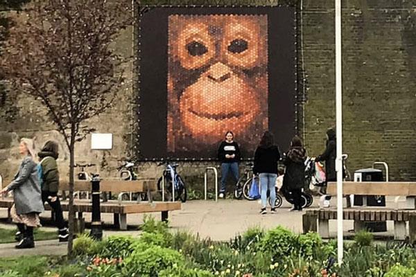 w4th-plinth-penny-orangutan-home