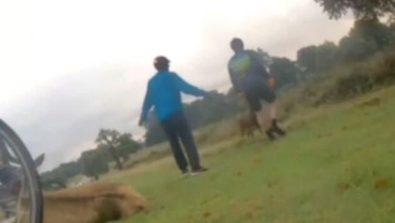 Deer attack richmond park