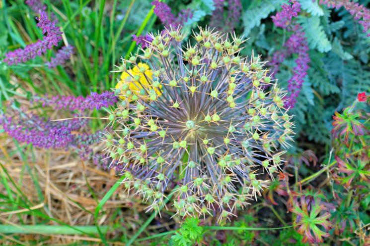 Abundance London planting - Barbara Chandler 1