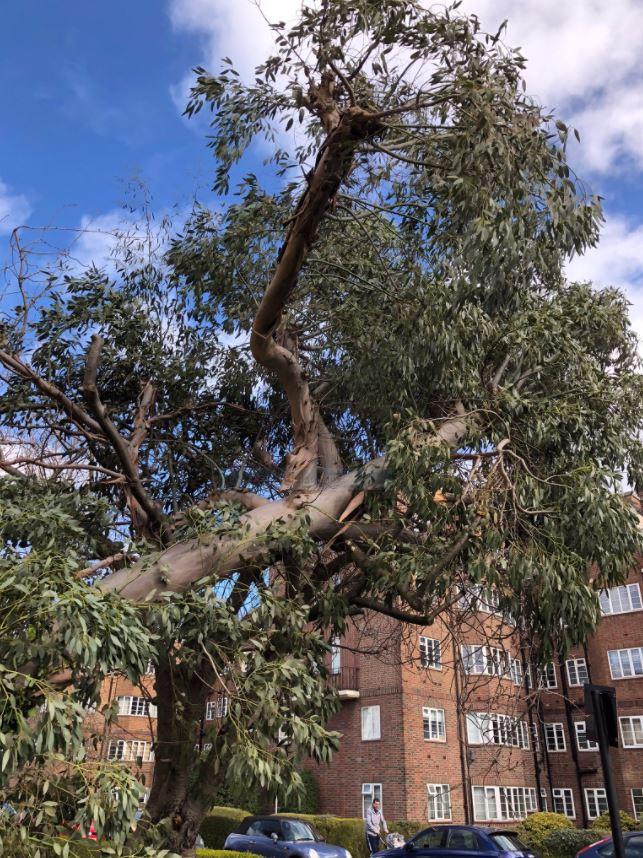 Chiswick Village tree 3
