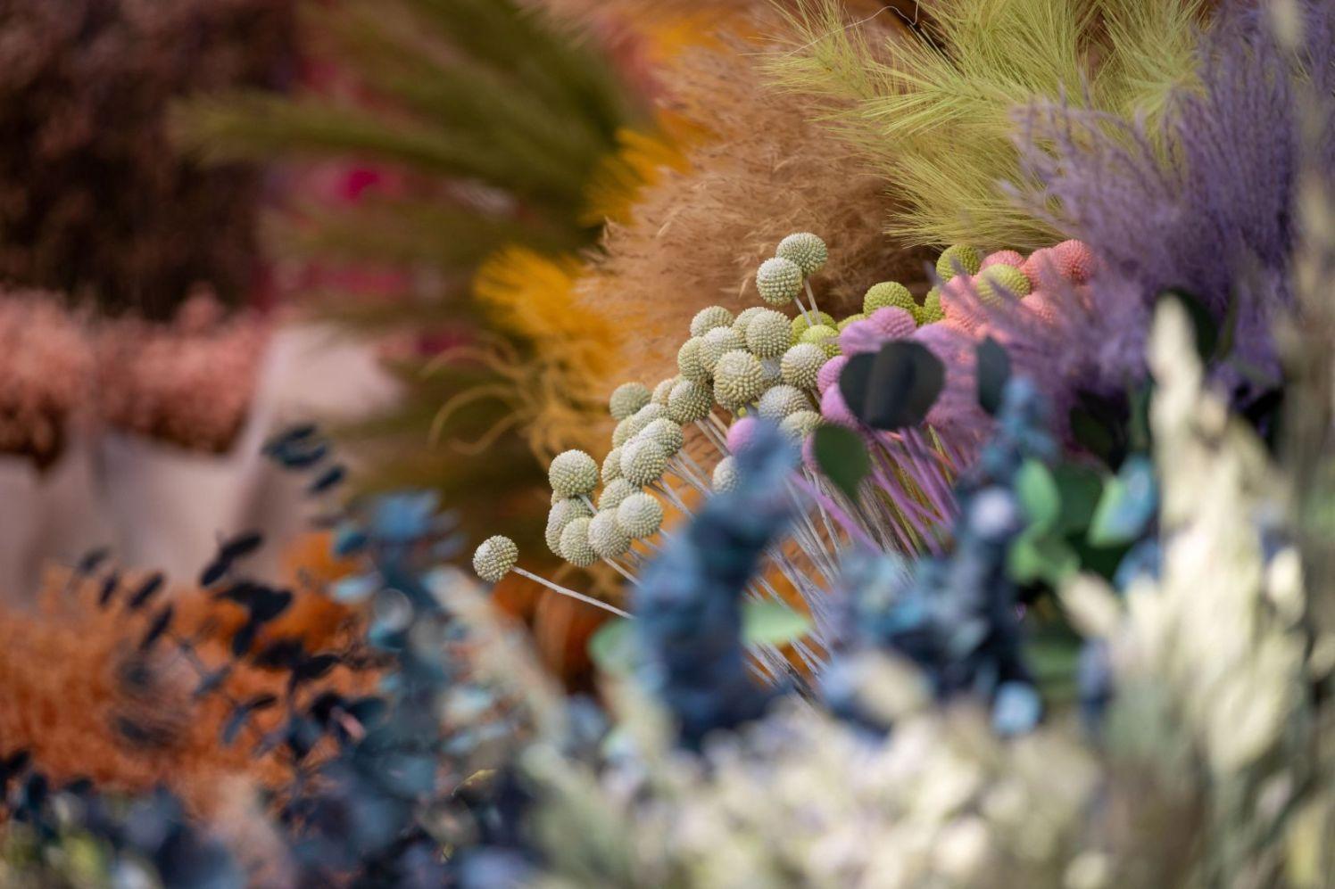 FlowerMarket-2761 May 2021 Anna Kunst