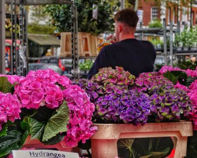 CL17 - Chiswick Flower Market - Chiswick Life