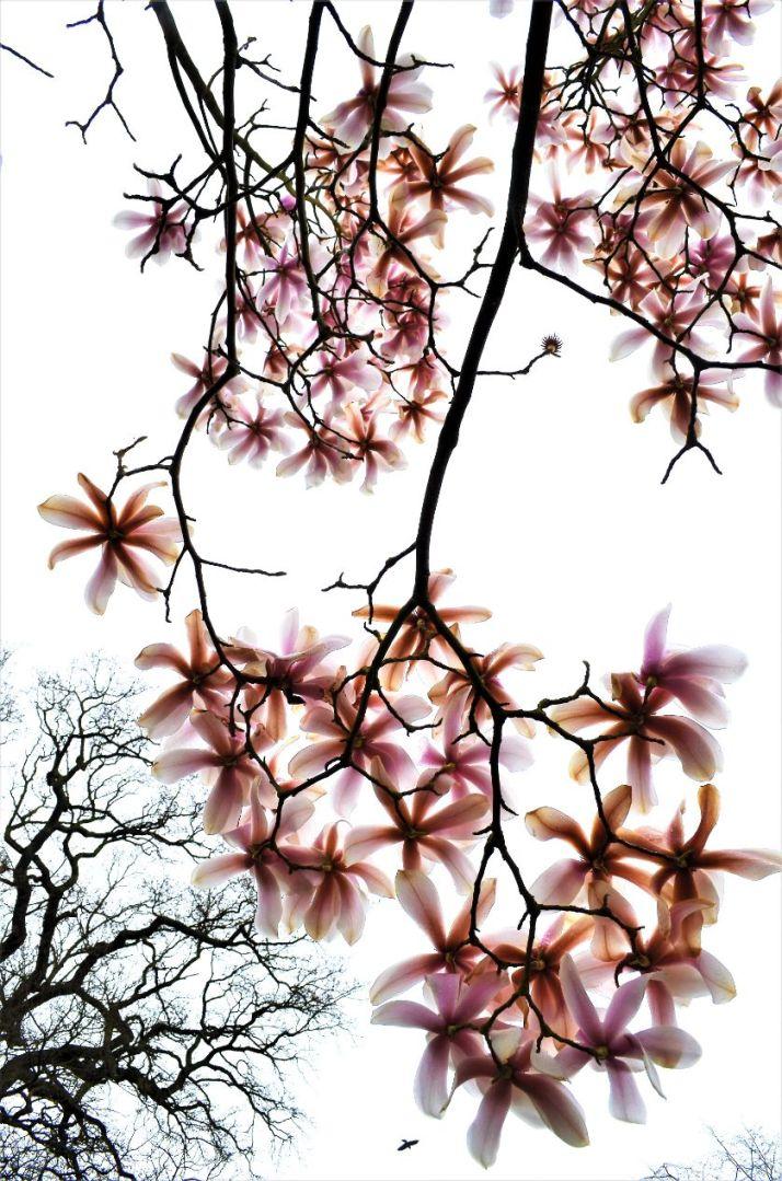 NW03 - Kew Beauty - Natural World
