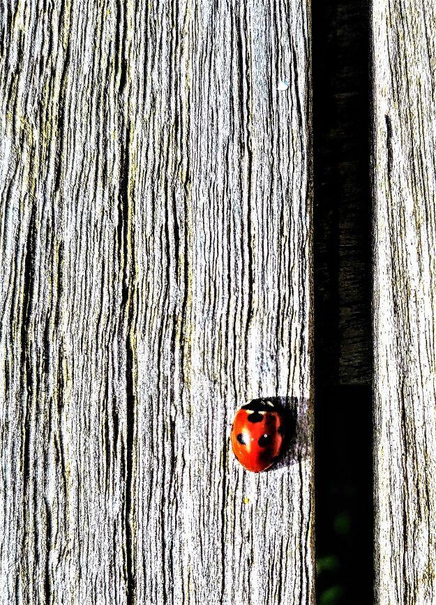 NW04 - Ladybird Luck - Natural World