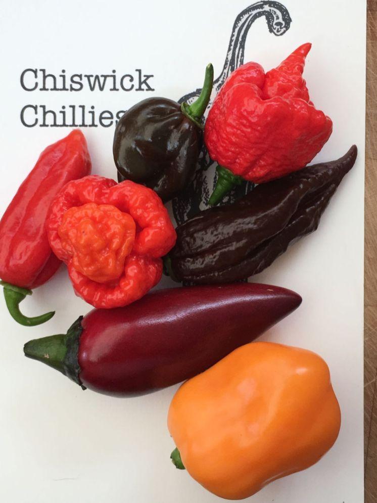 Chiswick Chillies - chilli varietes (1)