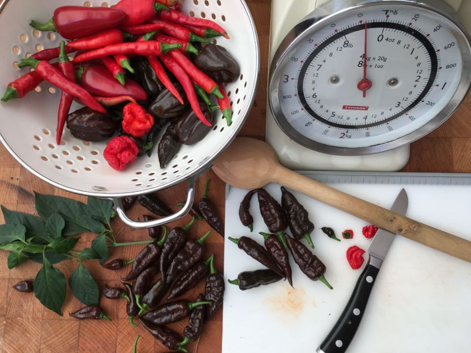 Chiswick Chillies - prepping chillies (1)