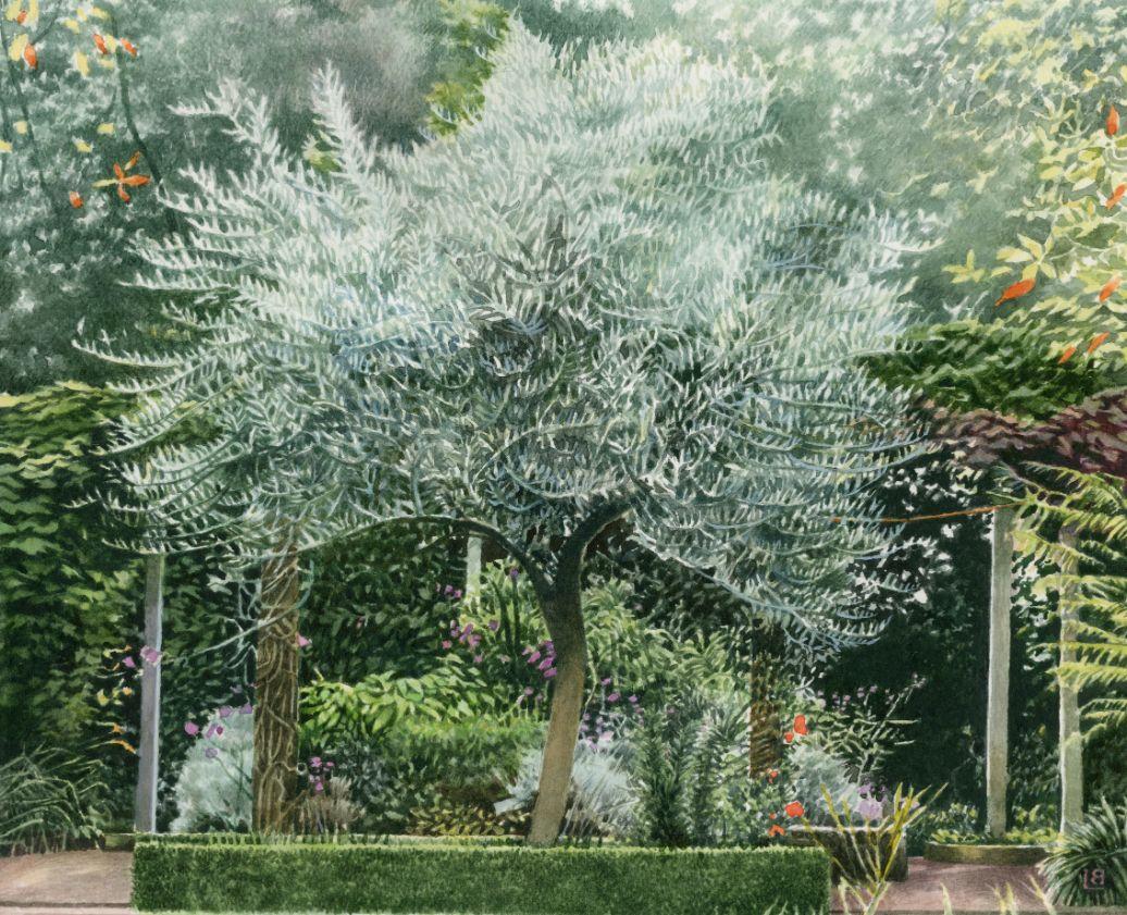 Liz Pinn - The Olive Tree 300dpi_web