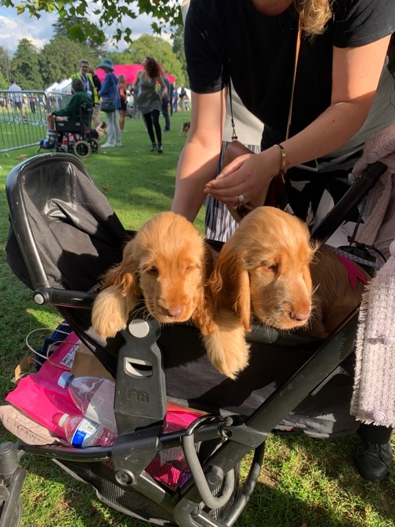 Chiswick House Dog Show Picture3 - Becky Bollard