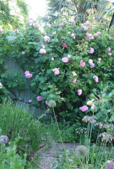 Jane Cumberbatch garden_web