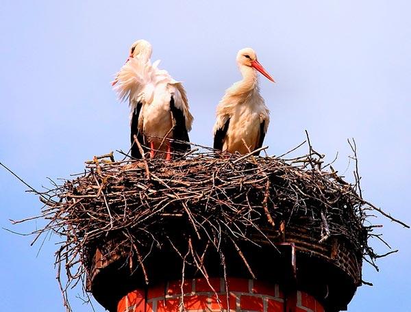 Краткое содержание Тургенев Дворянское гнездо для ...