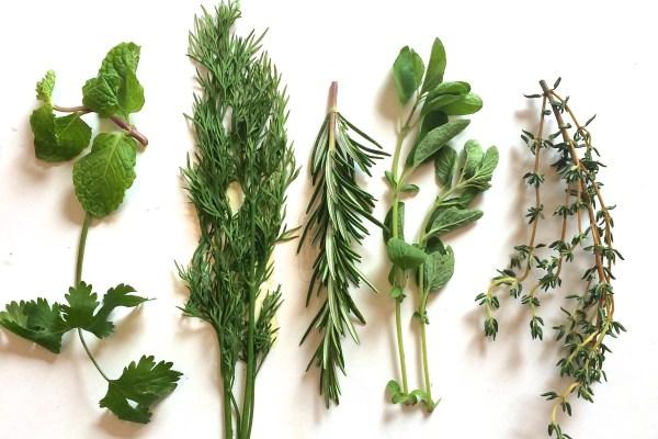 Carminative Herbs