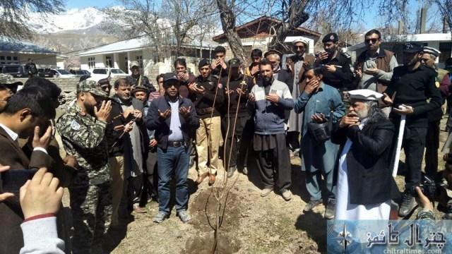 kaghlasht plantation chitral 5