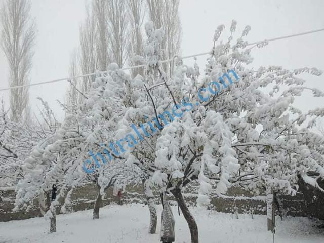 snow fall chitral4