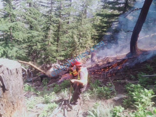 chitraltimes forest caught fire6