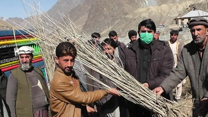 Plant Pakistan campaign launched in Drosh